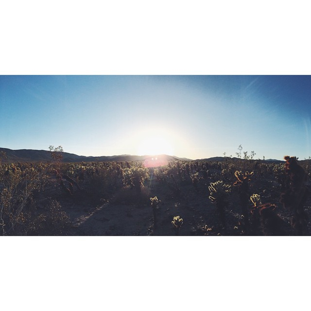 Joshua Tree #joshuatree #desert #california