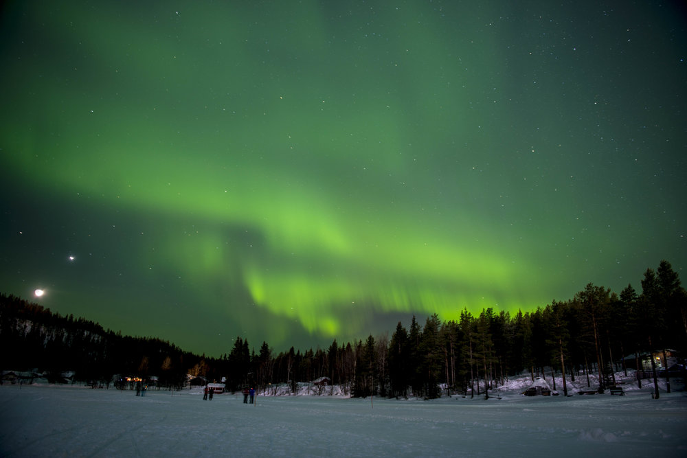 Monarch Lapland 2.jpg