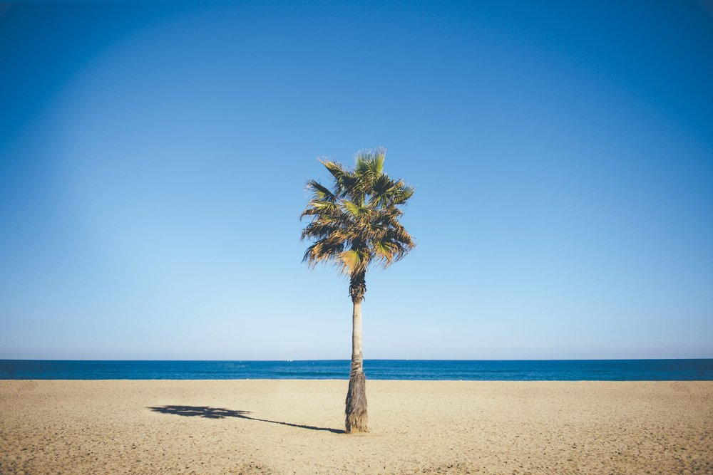 Barcelona Palm Tree.jpg