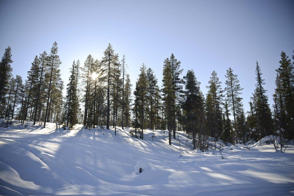 Lapland Forrest.jpg