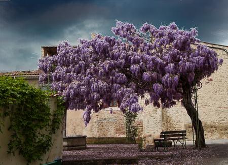 Encore une fois - the wisteria