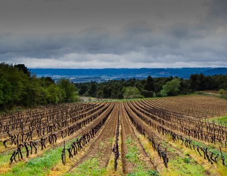 Vineyard outside of Cucuron