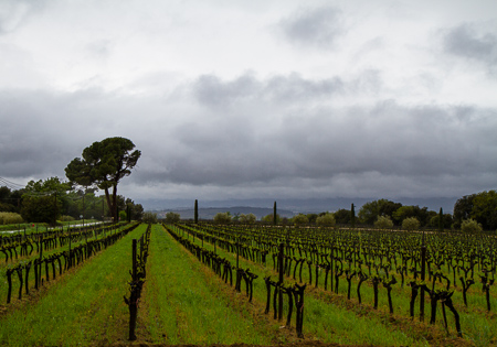 Chateau La Dorgonne vineyards