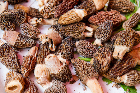 Fresh morels in the market