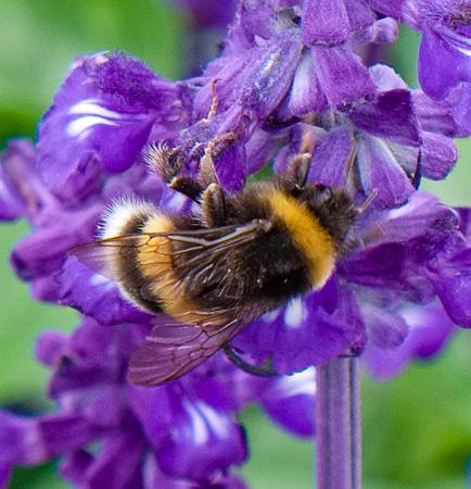 Bees & Flowers, Gustav Vigeland Park