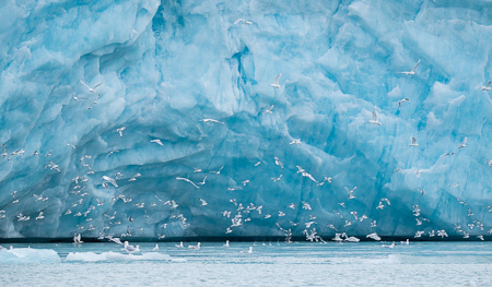 Seagulls and glacier