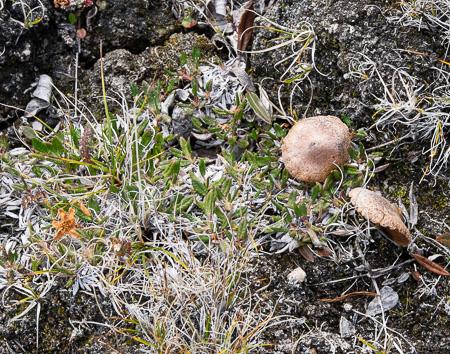 Mushrooms and tundra flowers