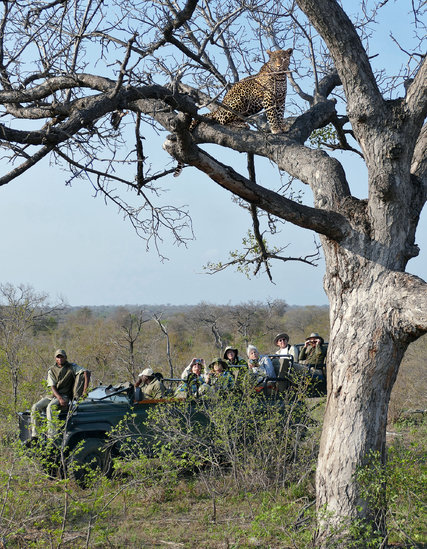 A safari group watching a leopard at a game reserve near Kruger National Park in South Africa. Credit Helen Macdonald