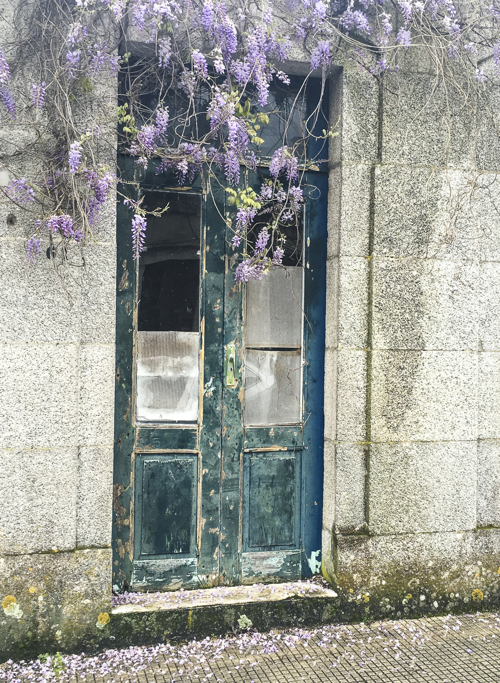 Yet more wisteria, doorway in Tui