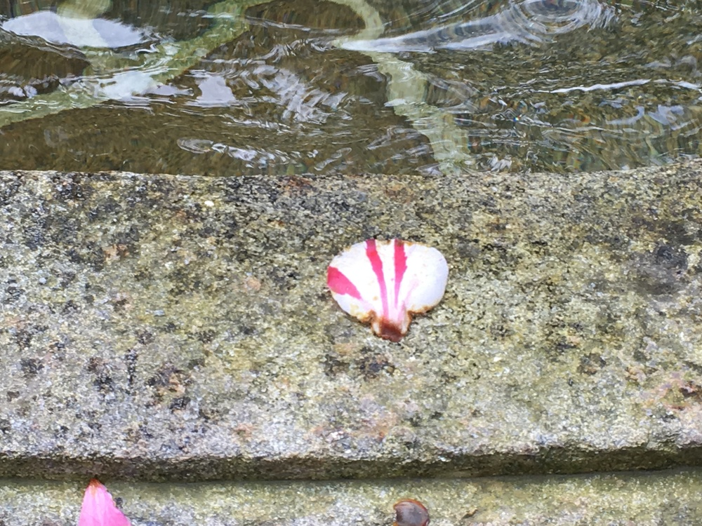 Scallop shaped petal. Fountain of the Compostela office.