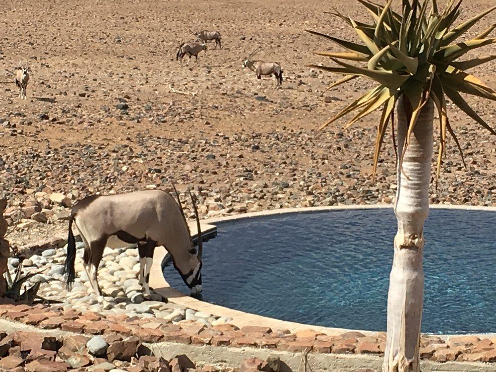 Oryx at the Lodge swimming pool
