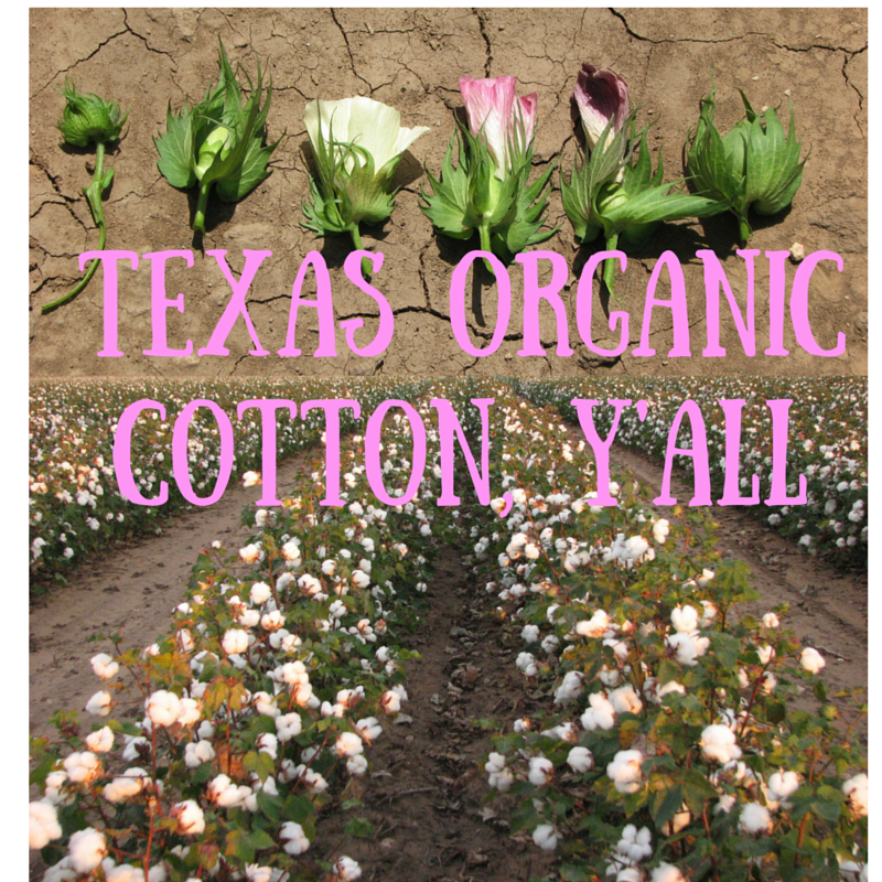 Texas Organic Cotton y'all cotton growth