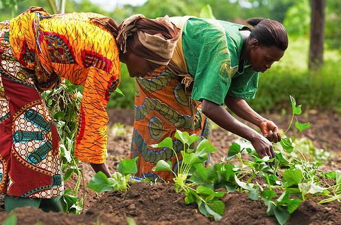 african_women_farming.jpg