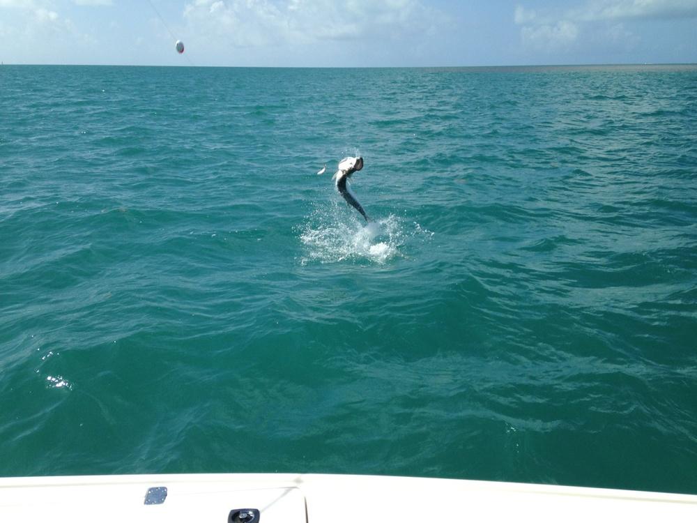 Looks like they had some luckTarpon fishing off Islamorada in the Florida Keys!!