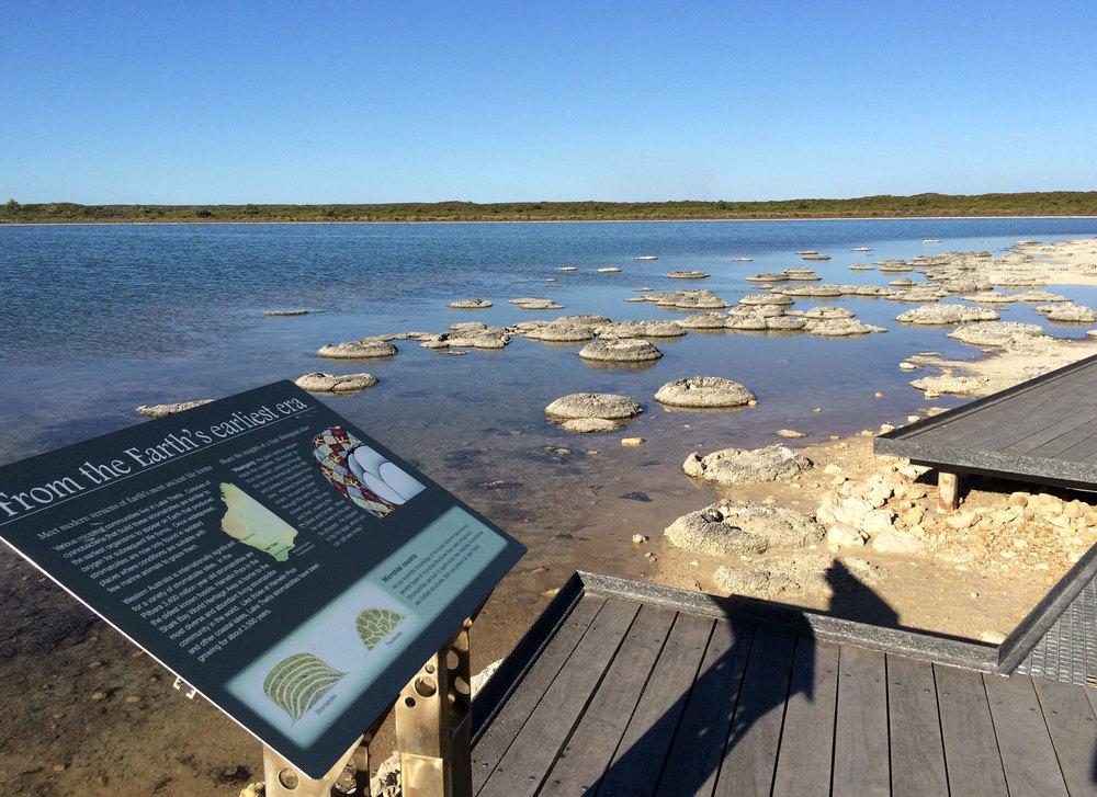 Stromatolites-Apr15_web.jpg
