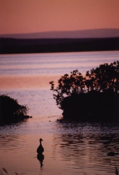 lake_myvatn2.jpg