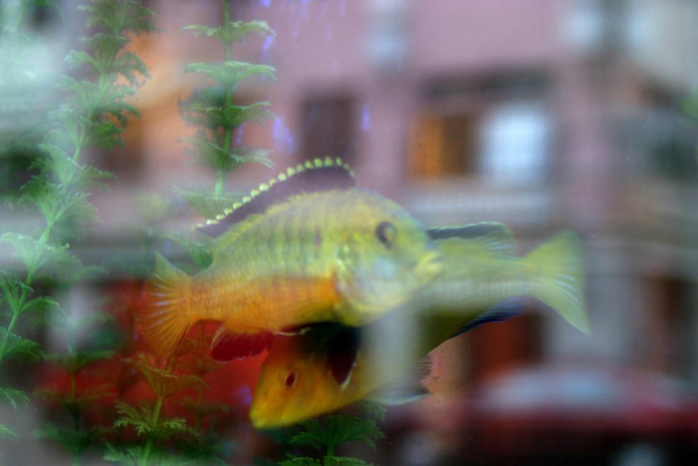 fish 3s.jpg