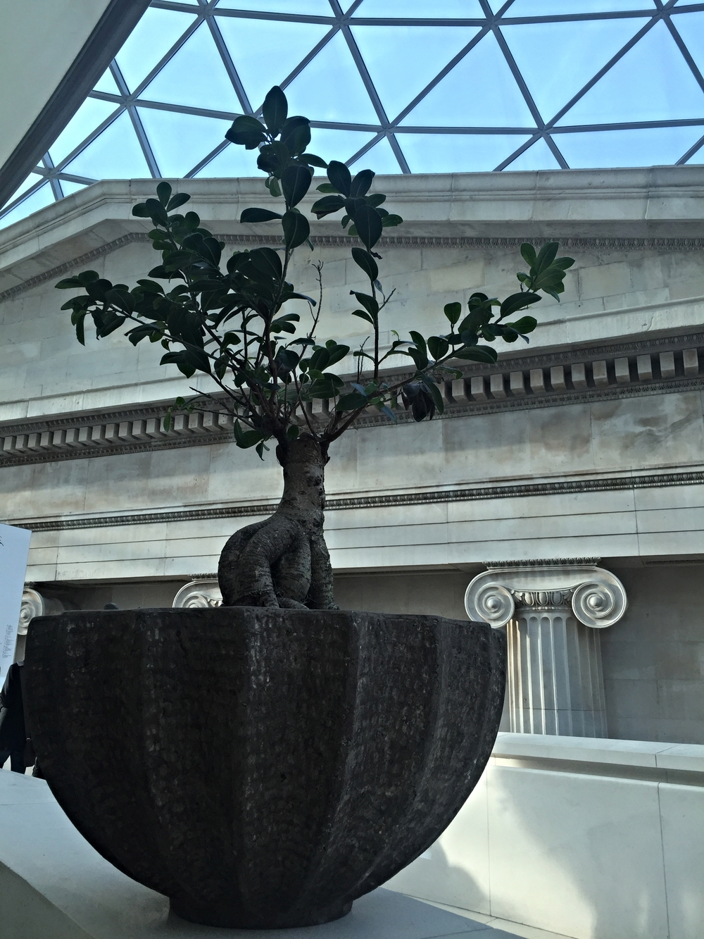 Something about this juxtaposition of nature, art, architecture, and light/space captured my attention as I sat for afternoon tea at the British Museum.