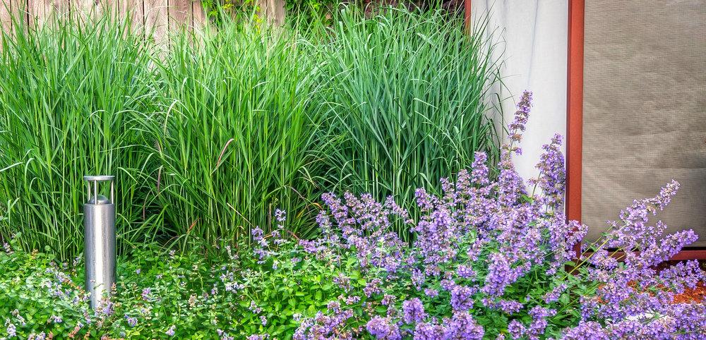 dayspring-gardens2.jpg