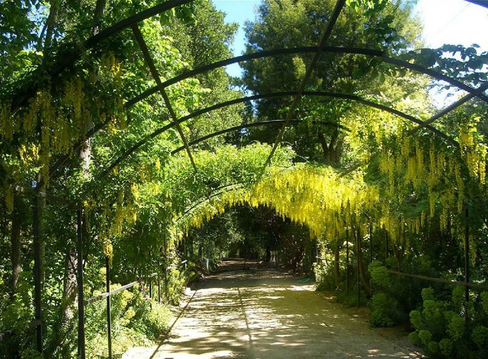 Garden+design+bay+area