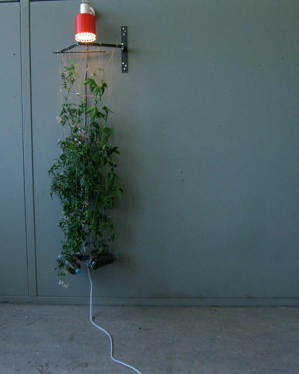 HangingGardenStill-2.jpg