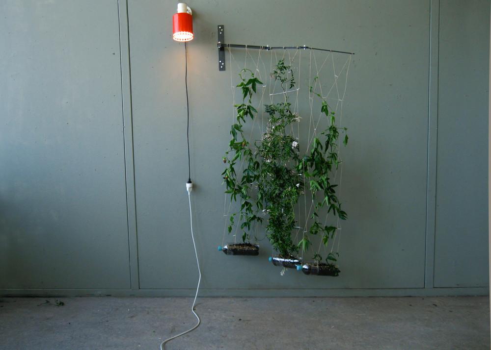 HangingGardenStill-3.jpg