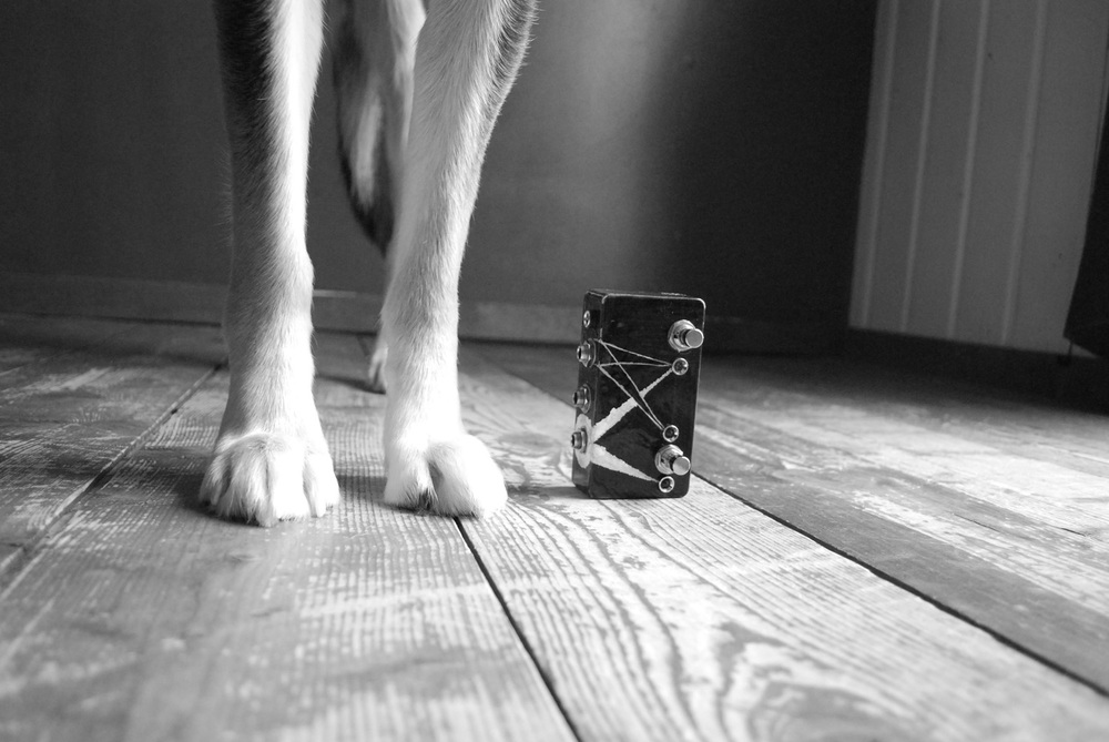 This is an ABY Splitter. The feet belong to our Alaskan Husky Stella. She likes to be in pictures with pedals. She's quite vain.