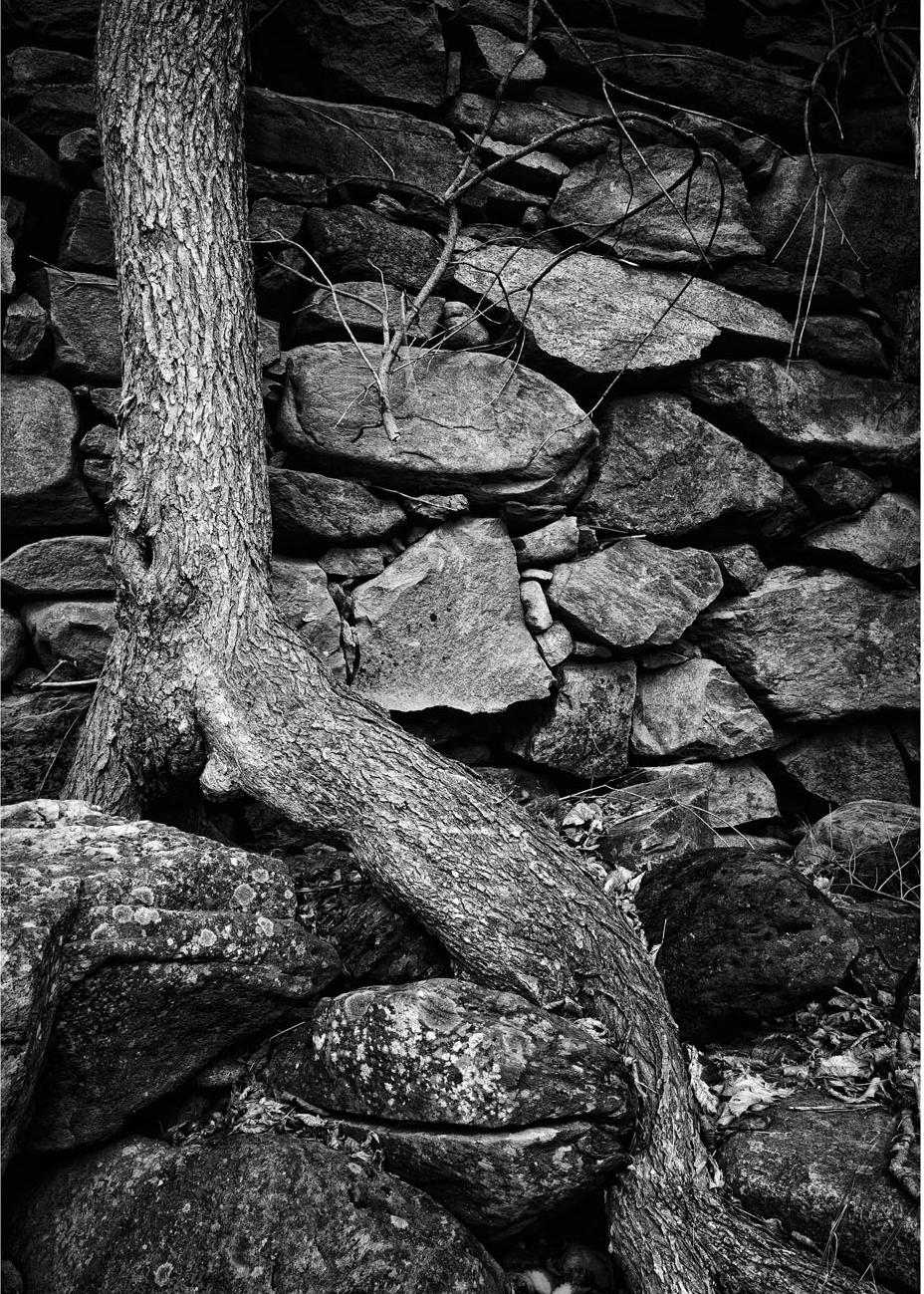 Tree Rock Moss_NAE.jpg