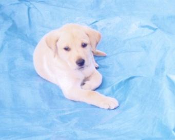 puppy Deek.jpg