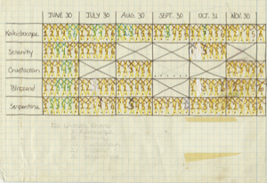 Wood That Works production chart of kinetic sculptures