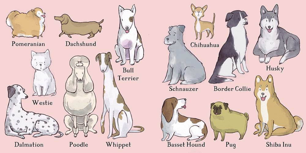 12 breeds.png