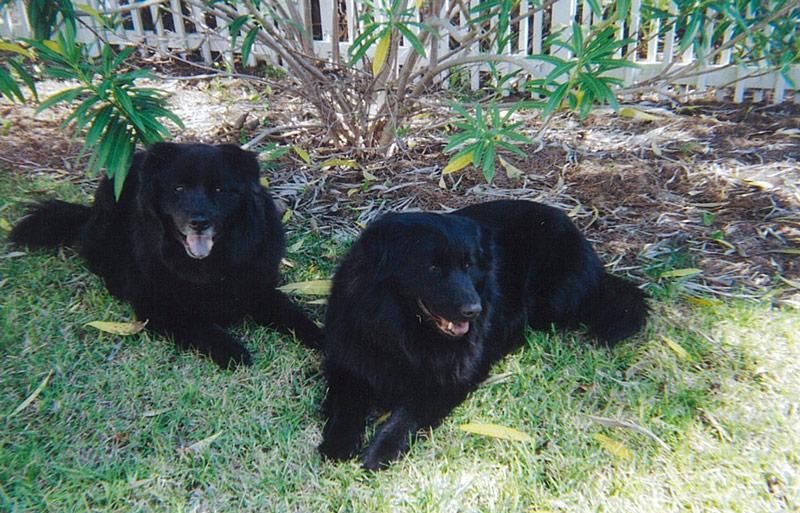 zoe.jpg. Black Dog Cellars. Wines that possess consistent intense ... & Rotating home banner images u2014 Black Dog Cellars