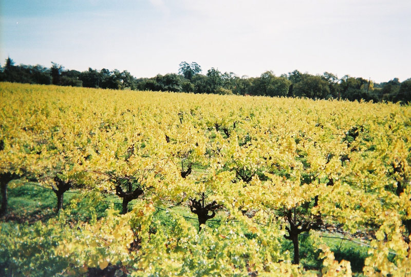 BLACK_DOG_CELLARS_vineyards.jpg