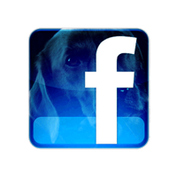 black_dog_facebook_icon.png