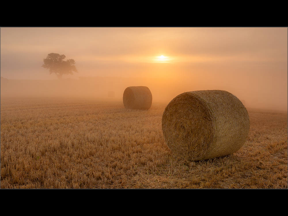 BALES  AND TREE IN THE MORNING MIST by Colin Mill.jpg