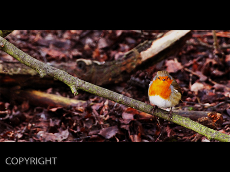 ROUND ROBIN by Mark Jones.jpg