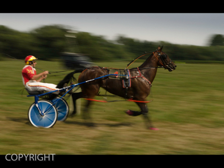 HARNESS RACING by Greg Moffatt.jpg