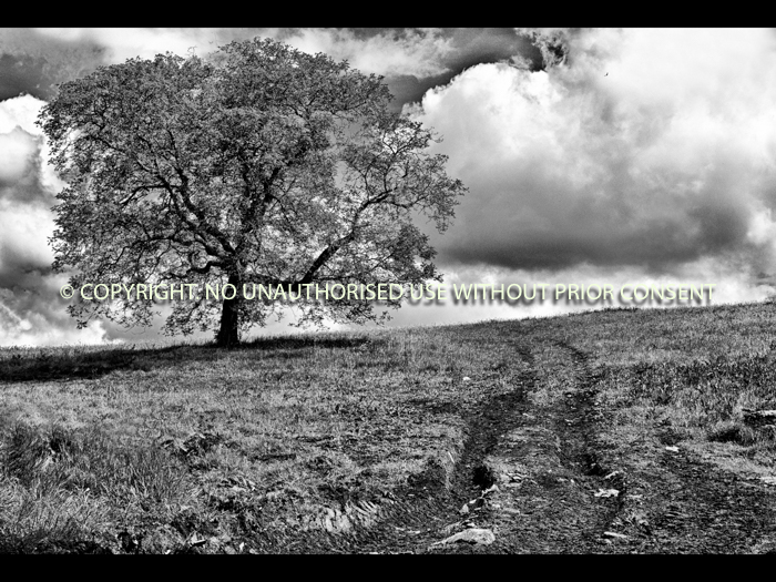TREE IN MUDDY FIELD by Ian Mellor.jpg