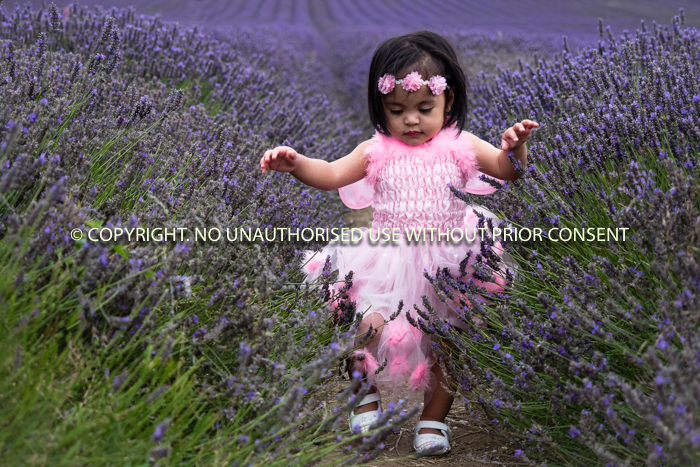 THE LAVENDER FAIRY by Sue Martin.jpg
