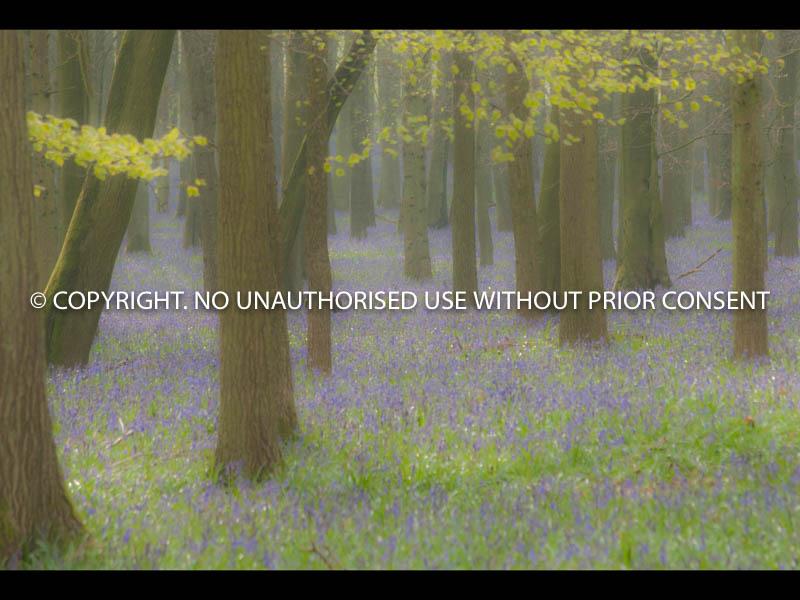 ASHRIDGE by Ian Mellor.jpg