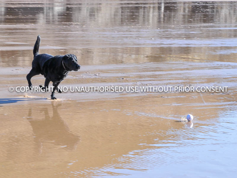 PLAYING BALL by Mike Newman.jpg