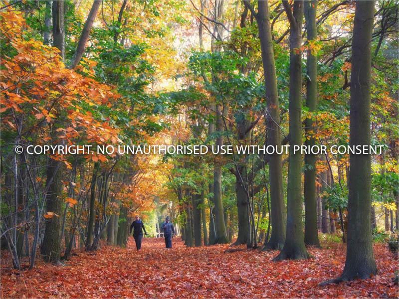 AUTUMN TREES by Ian Mellor.jpg