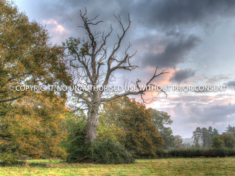 BLASTED OAK by Mike Newman.jpg