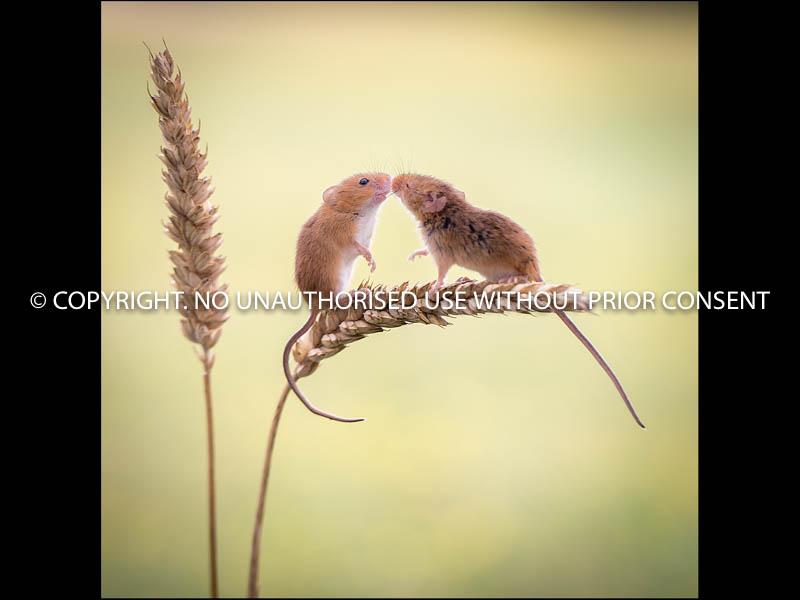 KISSES by Jamie White.jpg