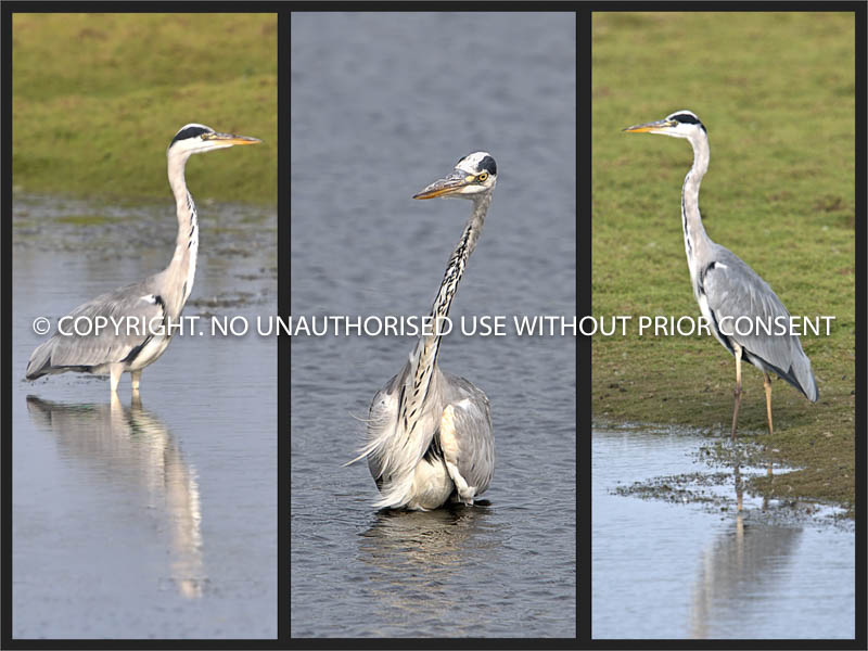 HERON PROFILES by Petar Maric.jpg