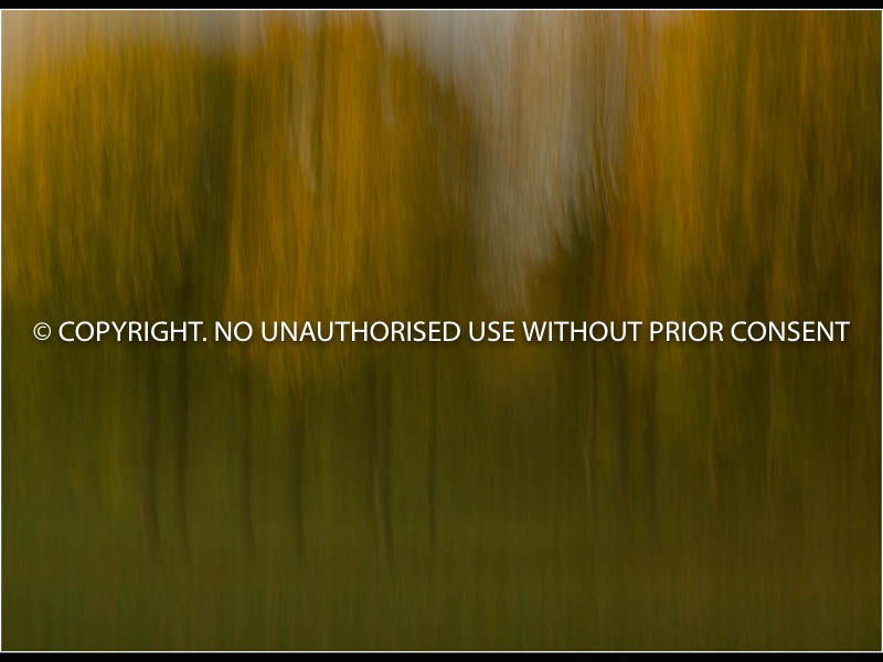 IMPRESSION - AUTUMN by Christine Peel.jpg