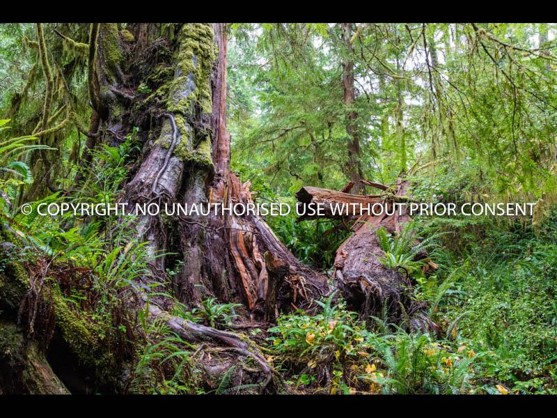 FOREST by Sue Martin.jpg