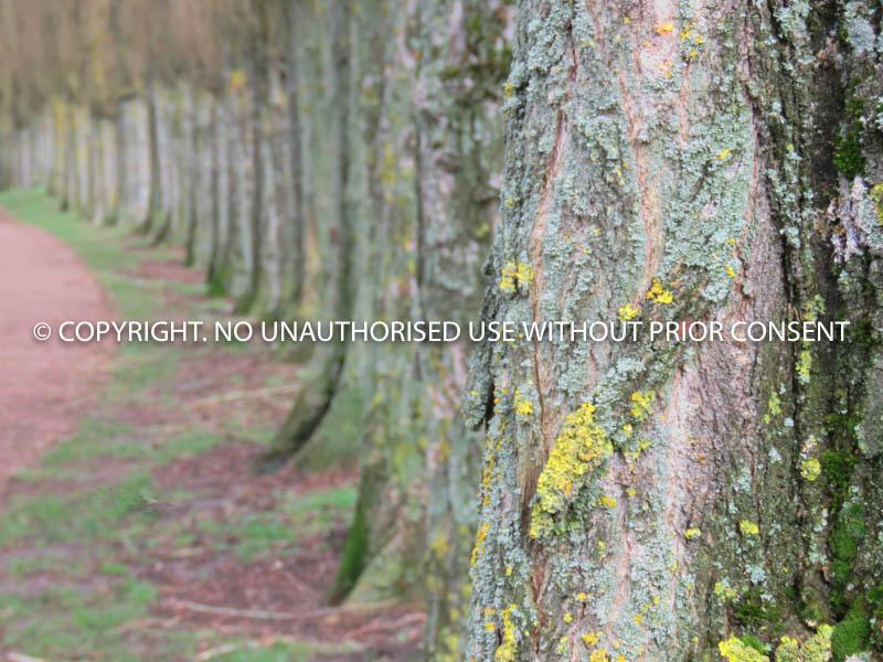 TREEEEEES by Margaret Stewart.jpg