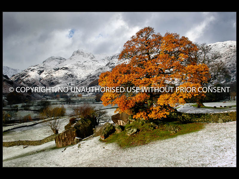 LANGDALE TREE by Robin Williams.jpg