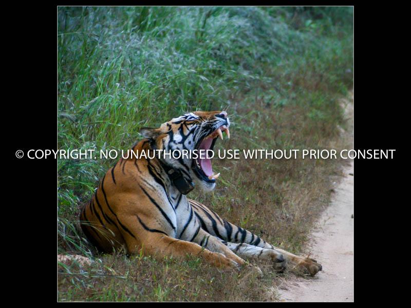 INDI-YA-FACE by steve white jr.jpg